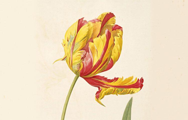 banner-Re-tuned-flower.jpg